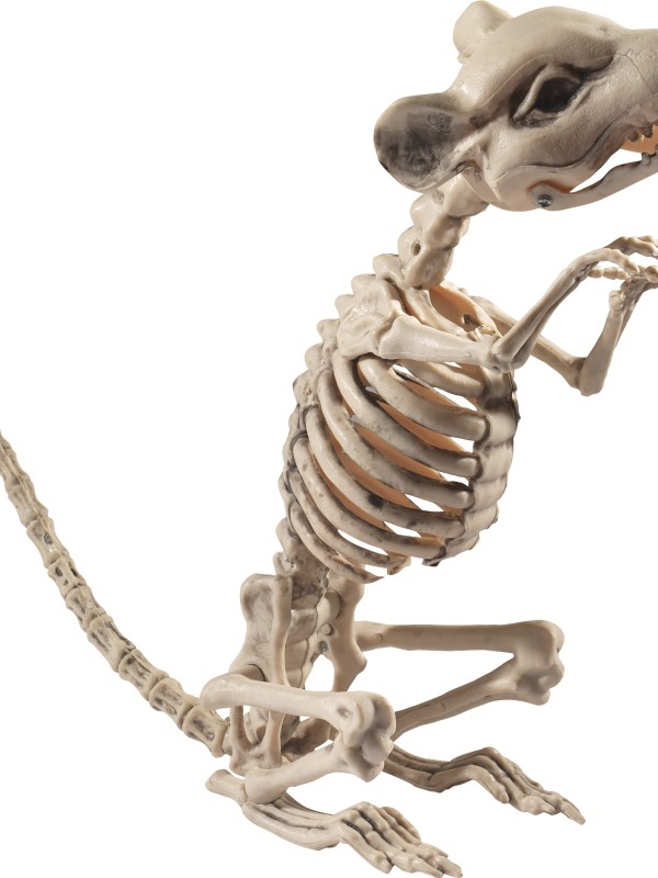 Rat Skeleton Prop