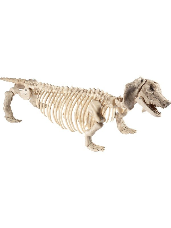 Dachshund Dog Skeleton Prop